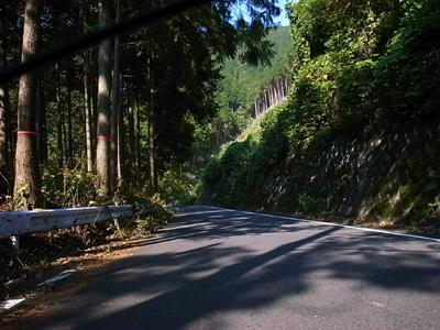 [IMAGE]ヤビツの中盤は緩やかな林道